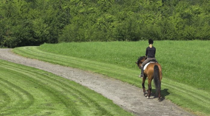 English horse and rider on a path through a park