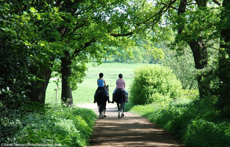 Trail riding through trees