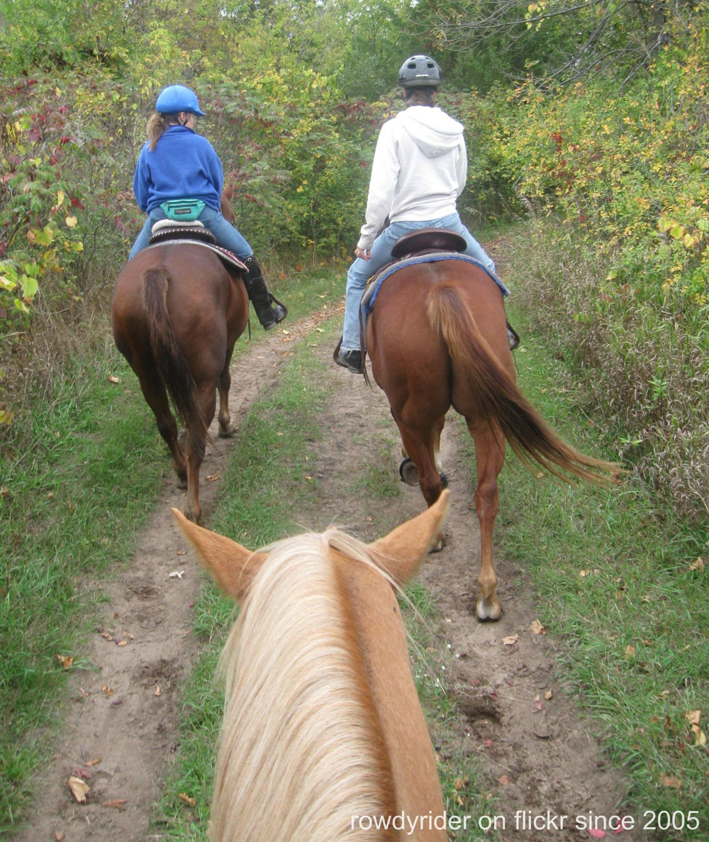 Horses and riders on a trail ride