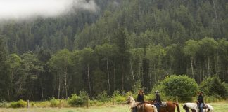 Group of trail riders in the mountains