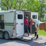 Loading a horse on the trailer
