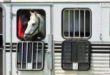 Horse in trailer
