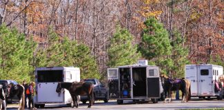 Horse trailers parked at a trailhead
