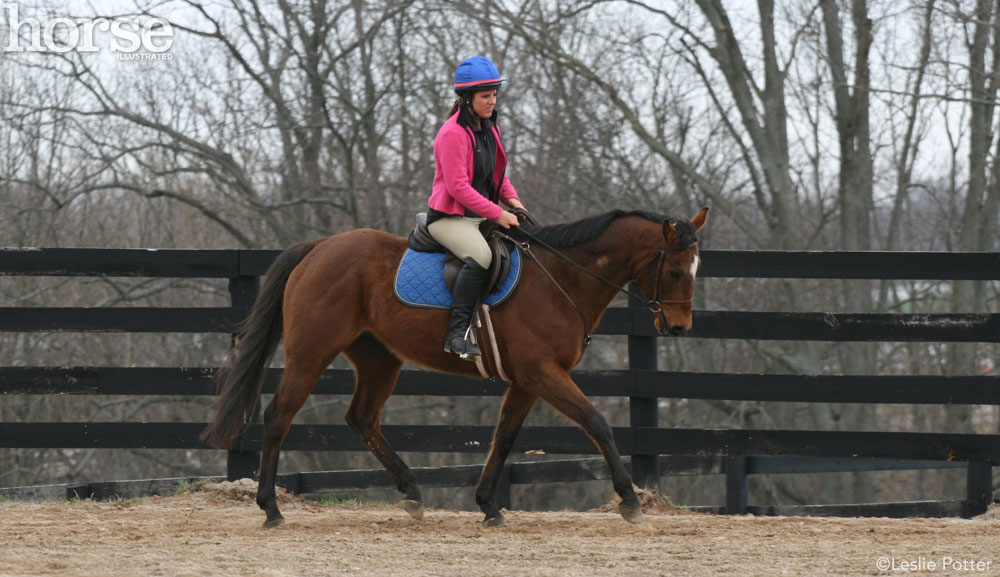 Off-track Thoroughbred being schooled at a trot