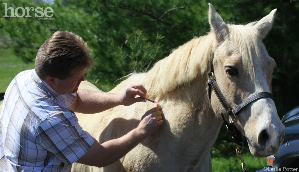 Vaccinations prevent common horse diseases