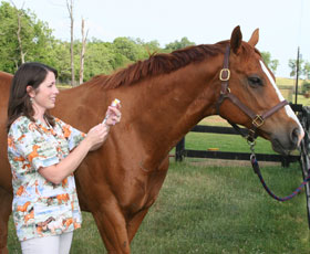 Equine vet drawing a vaccination