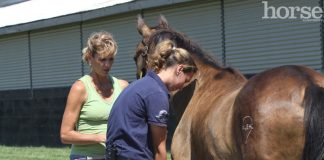Equine veterinarian performing a flexion test at the Kentucky Equine Humane Center