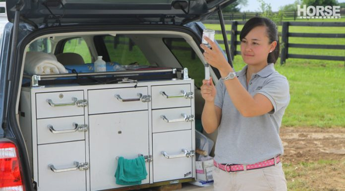 Equine vet preparing vaccinations