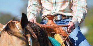 Western horse closeup