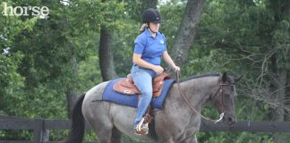 Roan western horse loping