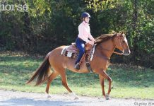 Western horse loping