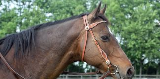 Horse in western snaffle bridle