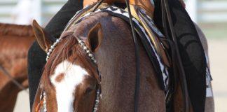 Roan western show horse
