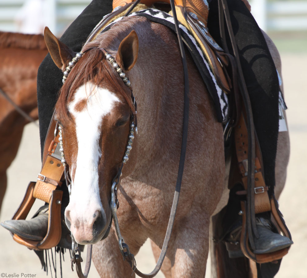 Roan western show horse