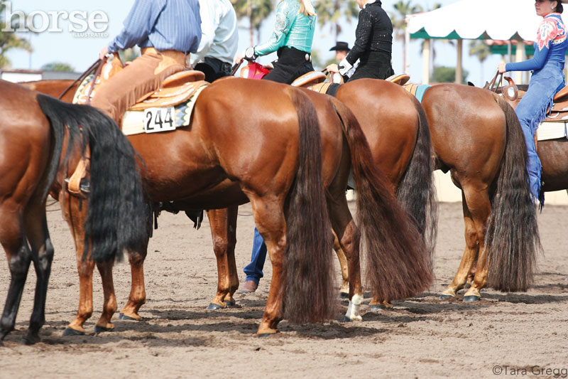 Tail Extensions For Western Show Horses Horse Illustrated