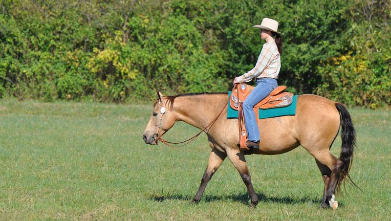Western horse and rider at a walk