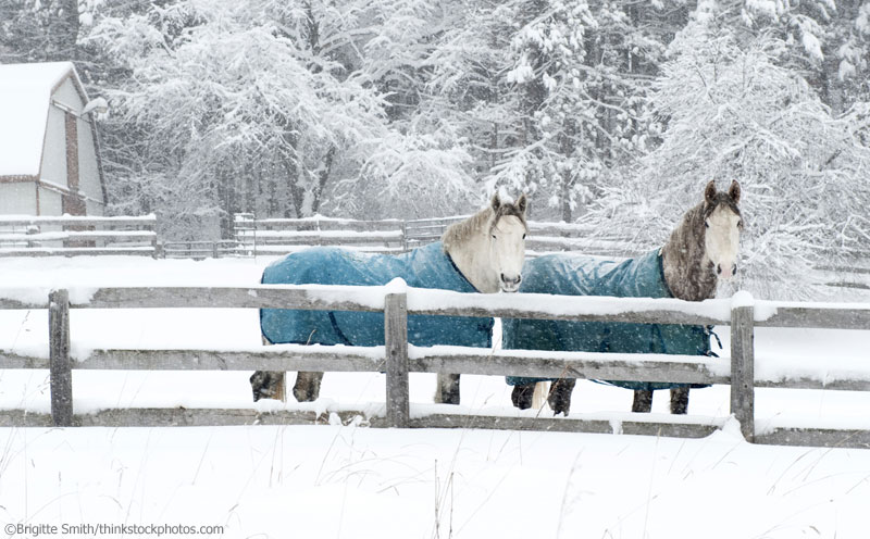 Horses wearing winter blankets