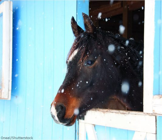Horse in stall in winter