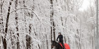 Riding a horse in winter