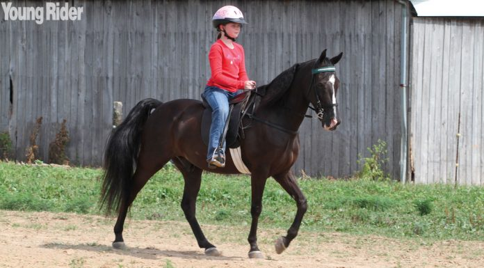 Young Rider on a Tennessee Walking Horse
