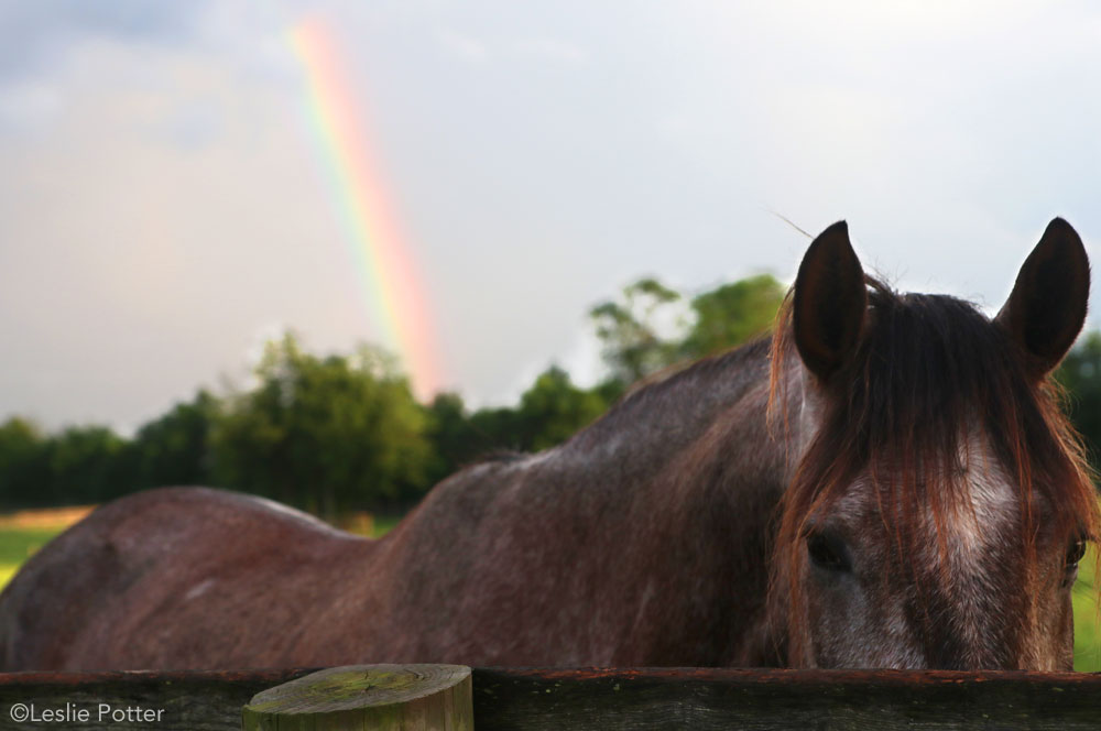 Horse and Rainbow - Adopting a Horse