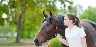 A young girl with a bay horse