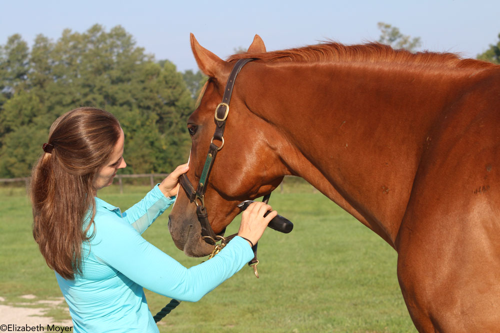 Clipping a horse's jaw