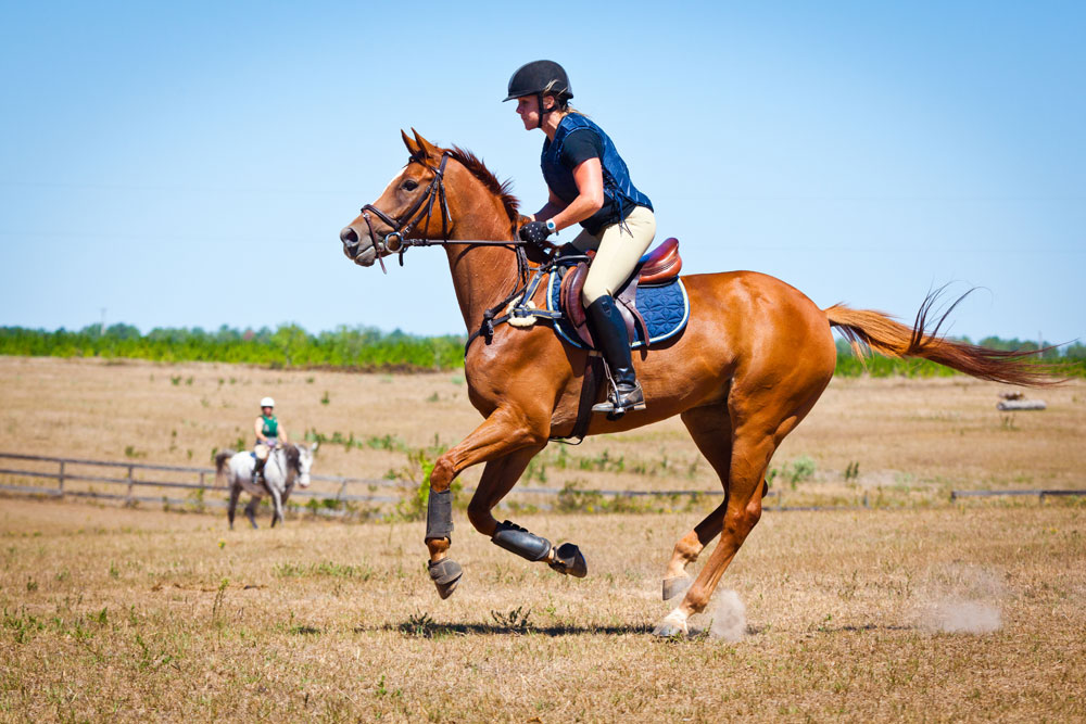 Galloping chestnut event horse