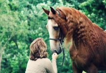 Adopted horse Reese with owner Diana Kitts