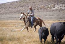 Cowboy riding a Paint Horse