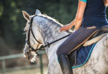 Rider patting a dapple gray horse
