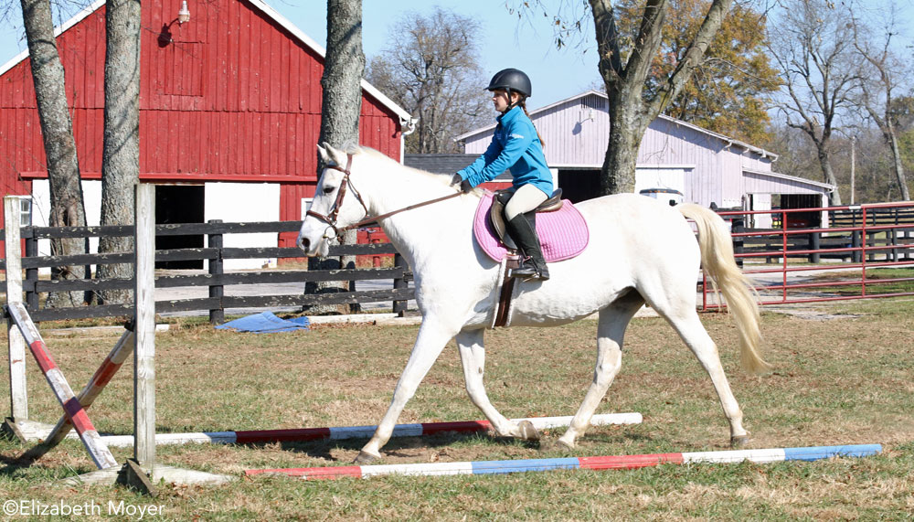 Horse trotting to crossrail- horse jump refusal