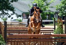 Horse jumping in a hunter class at a horse show