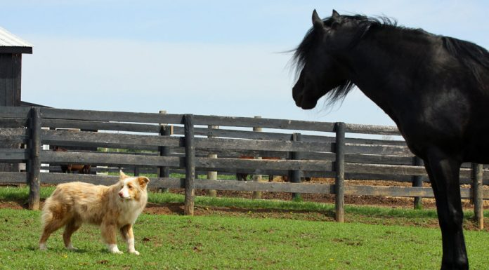 Horse and dog in a pasture