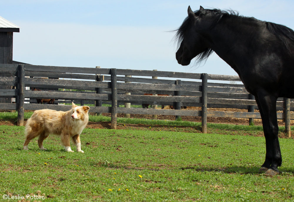 Horse and barn dog in a pasture