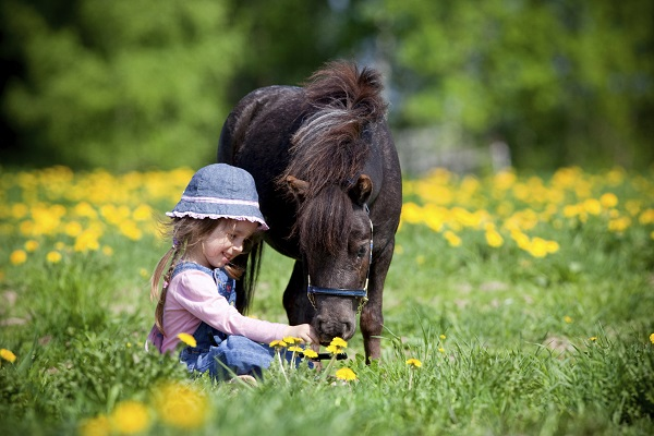 Mini horse with a young girl