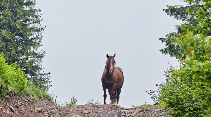 Horse on a dirt road
