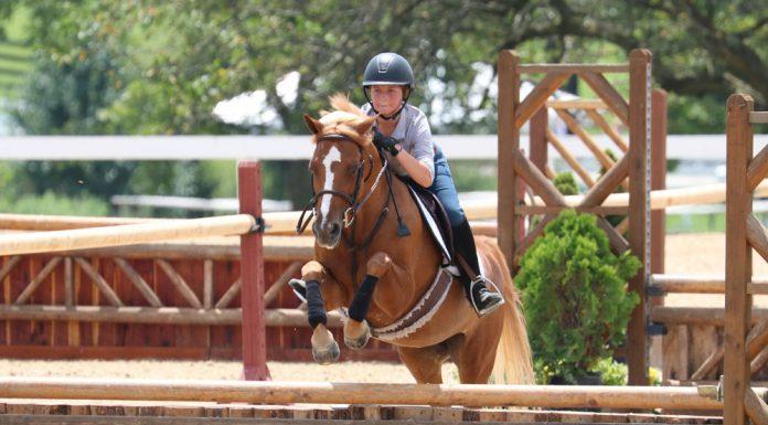 Pony jumping