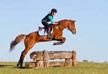 Chestnut horse over a cross-country jump