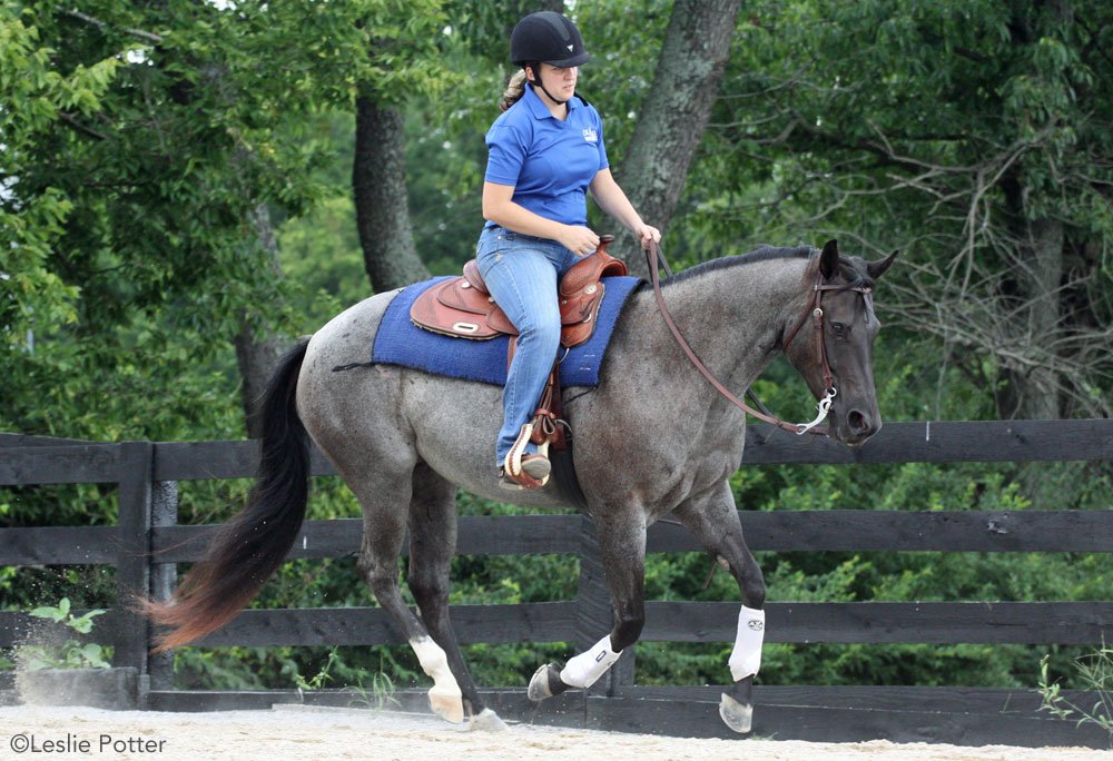 Roan horse lope