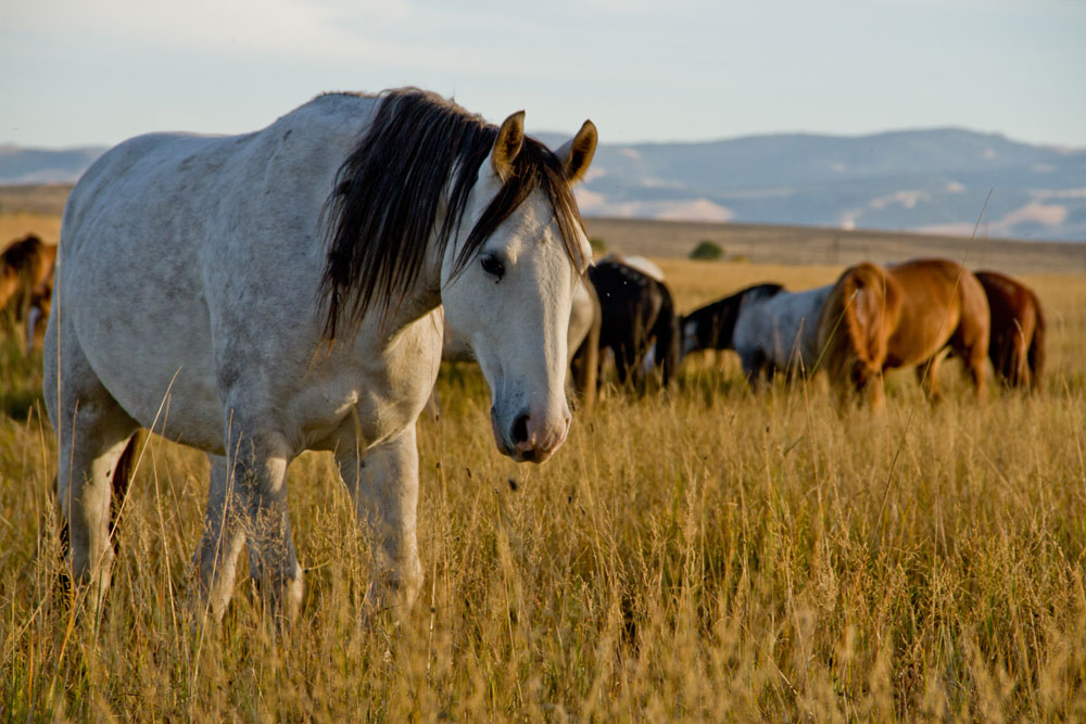 Wind River Wild Horse Sanctuary