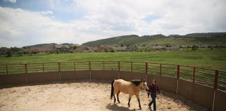 CSU student working with a horse