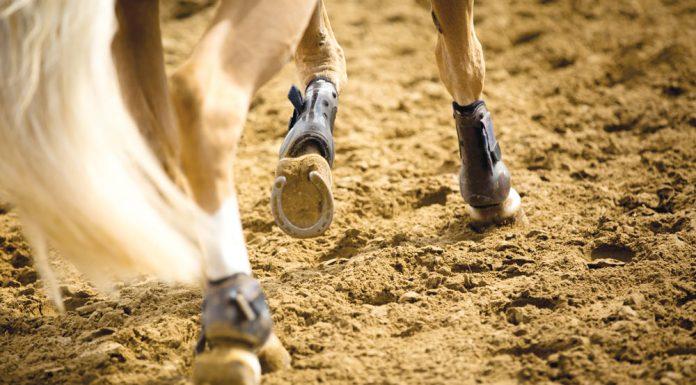 Horses's lower legs