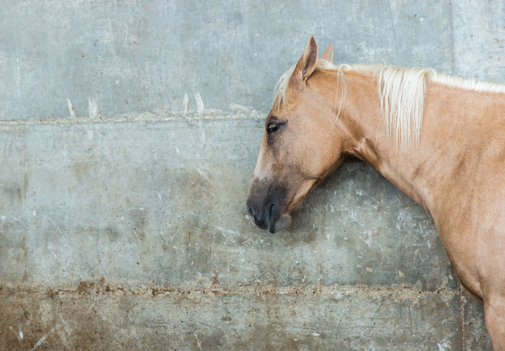 Horse against concrete wall