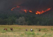Horses and wildfire