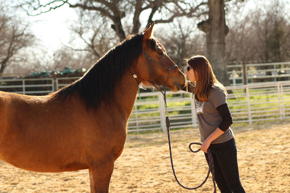 Trainer Kristen Breakfield at Horse Plus working with a horse
