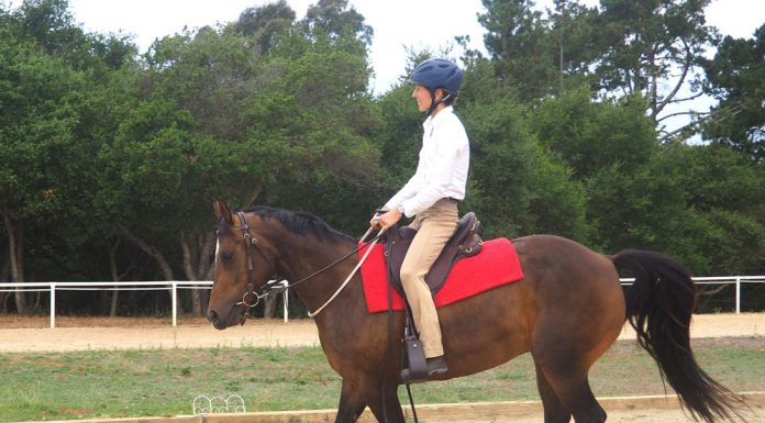 Cantering with a neck rope