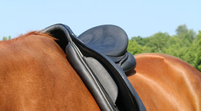 A well fitted English saddle