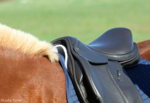 Checking an English saddle fit on a horse's back