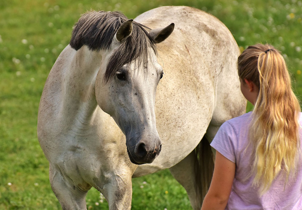 Girl meeting a gray horse in the pasture